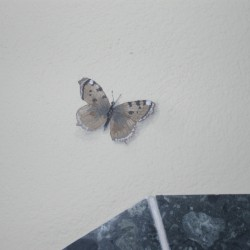 Illusionsmalerei Schmetterling